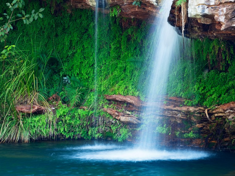 vibrant ferns by secluded waterfall