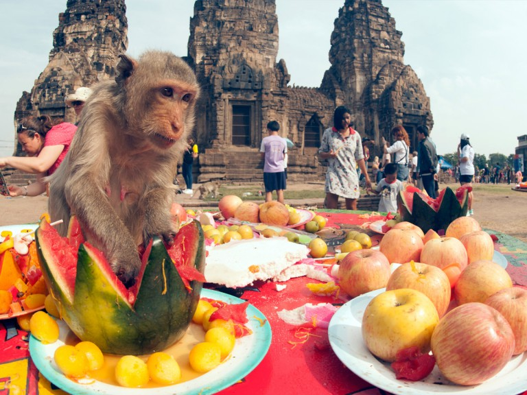 monkey eating fruit with tourists